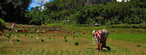Indonesie Ervaar het Balinese plattelandsleven