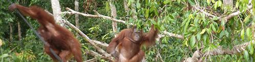 Kalimantan een avontuur